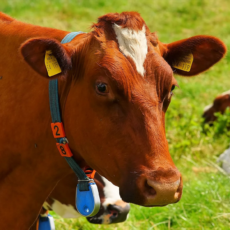 5 Reasons To Switch To Grass Fed Beef