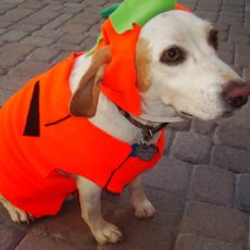 Different Breeds of Dogs Suit Different Costumes