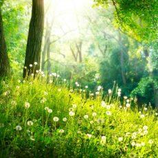 4 Ways Beautiful Scenery Impacts Your Health